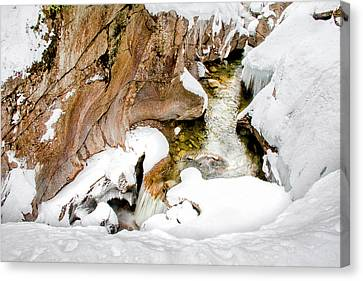 The Snow Bowl Canvas Print