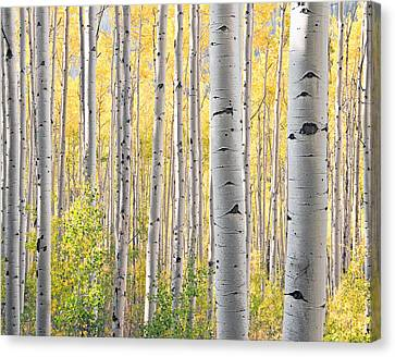 The Softer Side Of Fall Canvas Print by The Forests Edge Photography - Diane Sandoval