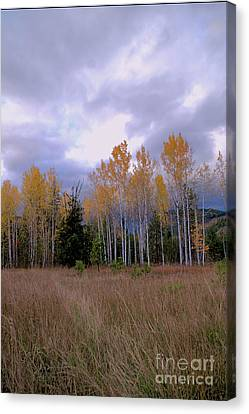 The  Song Of The Aspens 2 Canvas Print by Victor K