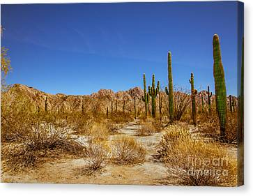 Haybales Canvas Print - The Sonoran Desert by Robert Bales