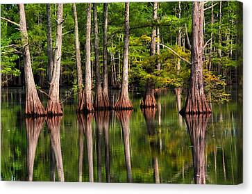Southern Swamp The Sound Of Silence Canvas Print