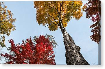 The Space Between Canvas Print by Glenn DiPaola