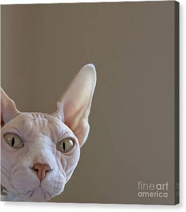 Sphynx Cat Portrait Canvas Print - The Sphynx by Glennis Siverson