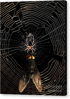 The Spider  And The Fly Canvas Print by Wingsdomain Art and Photography