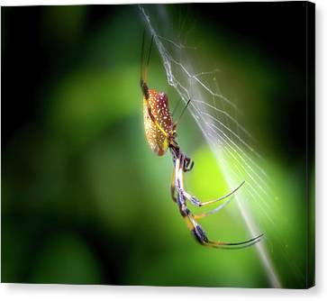 The Spider In The Forest Canvas Print by Mark Andrew Thomas