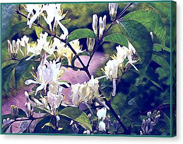 The Spring Honeysuckle Canvas Print