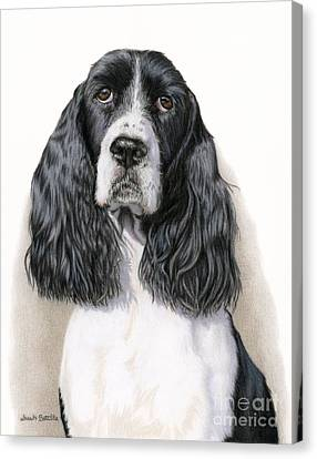 The Springer Spaniel Canvas Print by Sarah Batalka