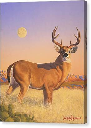 The Stag Canvas Print by Howard Dubois