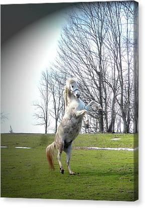 Canvas Print - The Stallion Dancer by Patricia Keller