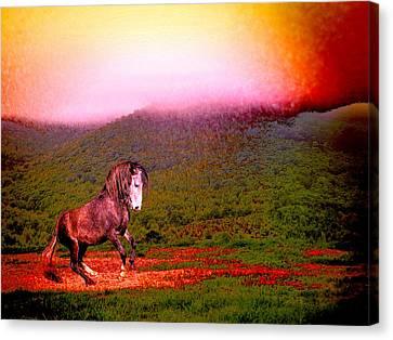 Canvas Print - The Stallion Has Faith by Patricia Keller