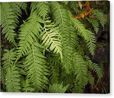 The Standout Fern Canvas Print by Jean Noren