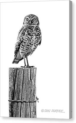 Canvas Print featuring the photograph The Stare by Don Durfee