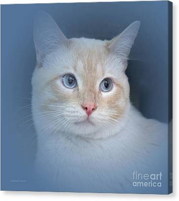 Flame Point Siamese Canvas Print - The Story Of Blue Eyes  by Malanda Warner