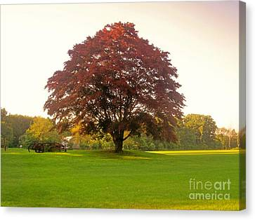 The Storybook Tree Canvas Print