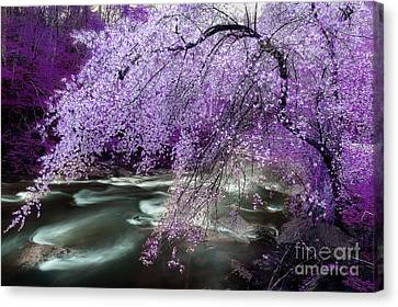 The Stream's Healing Rhythm Canvas Print by Michael Eingle