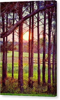 Canvas Print featuring the photograph The Sun Pines Away by Jan Amiss Photography