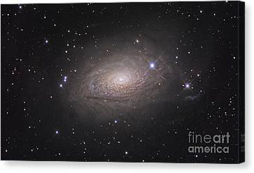 The Sunflower Galaxy Canvas Print