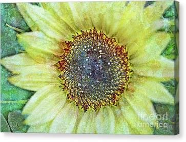The Sunflower Canvas Print by Tara Turner