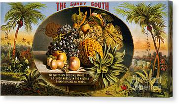 Labelled Canvas Print - The Sunny South Vintage Fruit Label by Edward Fielding