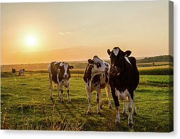 Canvas Print featuring the photograph The Sunset Graze by Joel Witmeyer