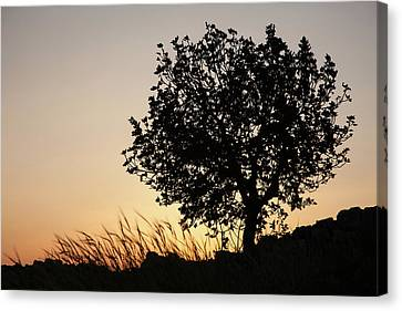Canvas Print featuring the photograph Sunset On The Hill by Yoel Koskas