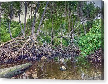 The Swamp Canvas Print by Nadia Sanowar