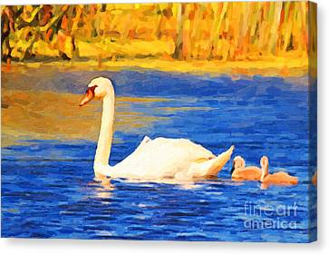 The Swan Family . Photoart Canvas Print by Wingsdomain Art and Photography