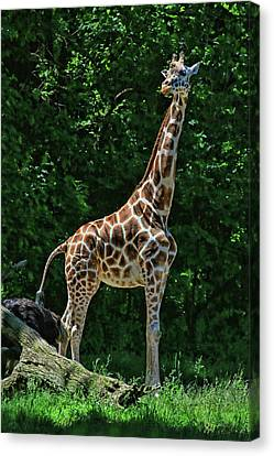 Canvas Print - The Tall One by Allen Beatty