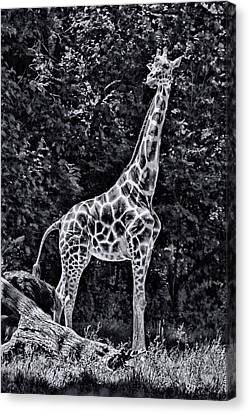 Canvas Print - The Tall One - Black And White by Allen Beatty
