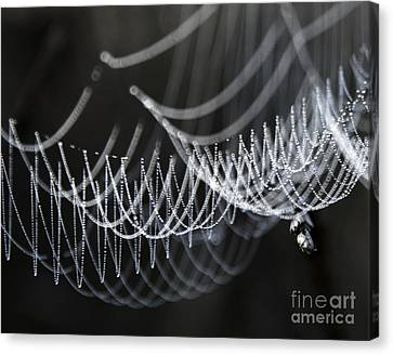 The Tangled Webs We Weave Canvas Print