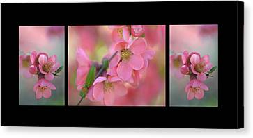 The Tender Spring Blooms. Triptych On Black Canvas Print by Jenny Rainbow