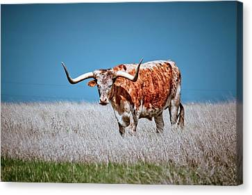 Canvas Print featuring the photograph The Texas Longhorn by Linda Unger