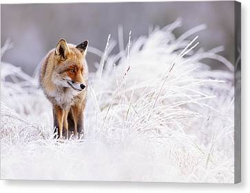 The Thinker - Red Fox In A Wintery Landscape Canvas Print by Roeselien Raimond