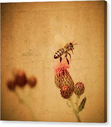 The Thistle And The Bee Canvas Print