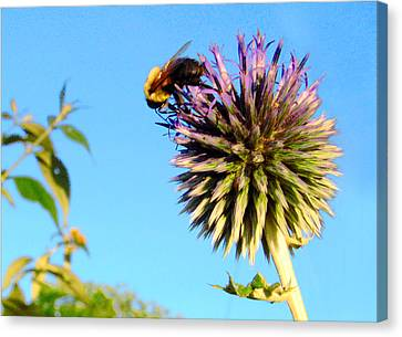 The Thistle And The Bee. Canvas Print