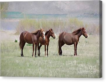 Canvas Print featuring the photograph The Three Amigos by Benanne Stiens