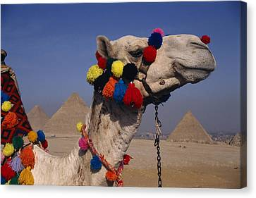 The Three Great Pyramids Of Giza Canvas Print by Stephen St. John