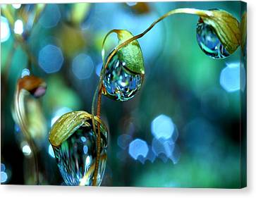 Droplet Canvas Print - The Threesome by Sharon Johnstone