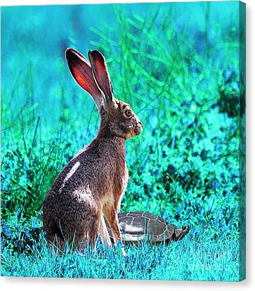 The Tortoise And The Hare . Cyan Square Canvas Print by Wingsdomain Art and Photography