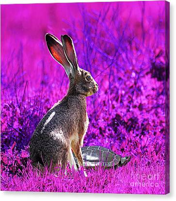 The Tortoise And The Hare . Magenta Square Canvas Print by Wingsdomain Art and Photography