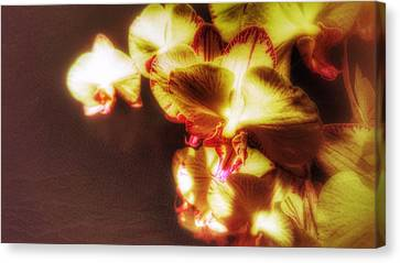 Canvas Print featuring the photograph The Touch by Isabella F Abbie Shores FRSA