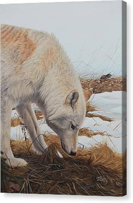 Picking Up A Scent Canvas Print - The Tracker by Tammy  Taylor