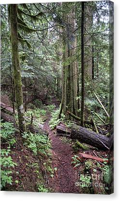 the Trail Canvas Print by Rod Wiens