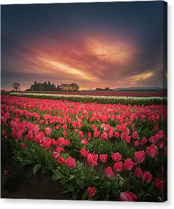 Canvas Print featuring the photograph The Tranquil Morning Before Sunrise by William Lee