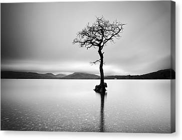 The Tree Canvas Print by Grant Glendinning
