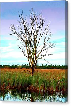 The Tree In The Marsh Canvas Print by Judi Bagwell