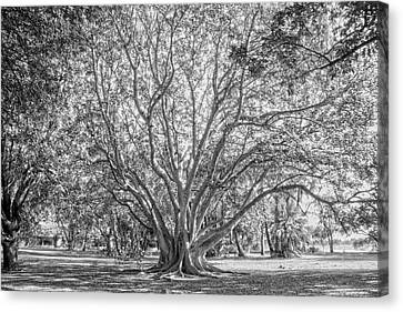 The Tree In The Middle Canvas Print