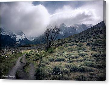 The Tree In The Wind Canvas Print by Andrew Matwijec