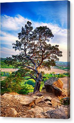 Hdr Look Canvas Print - The Tree by Keith Homan