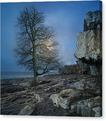 The Tree Of Inis Mor Canvas Print